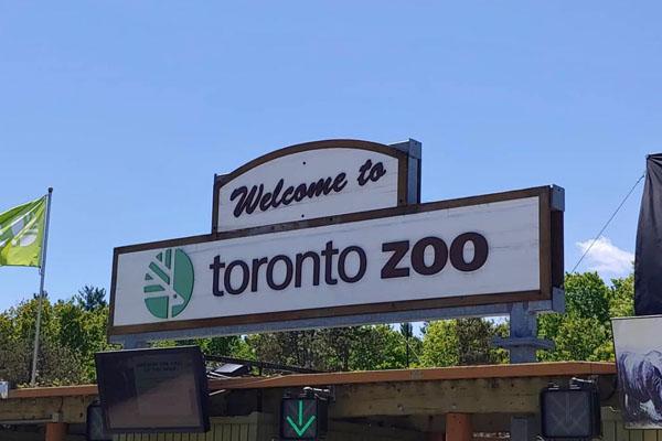 toronto zoo summer party